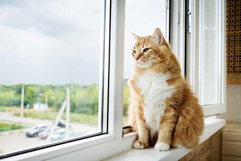 Photo of an orange cat sitting in a window